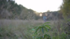 Man cyclist to riding a bicycle in the meadow. Plant in the foreground Stock Footage