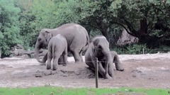 Young elephant playing in the sand. Stock Footage