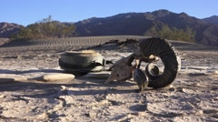 Zoom in / out, Life and death in Death Valley Stock Footage