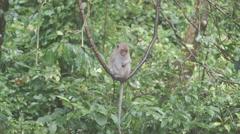 The monkey sits and eats on rock. at Khao Ngoo Rock Park , Ratchaburi , Thailand Stock Footage