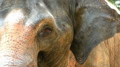 Thai elephant eyes Stock Footage