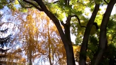Beautiful autumn trees, yellow and green, against sunlight Stock Footage