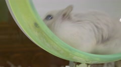 Close up of hamster face on wheel with cloudy cataracts in eyes Stock Footage