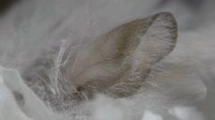 Macro beige hamster ear Stock Footage