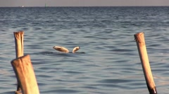 Seascape. Seagull during the hunt. Stock Footage