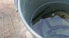 The Caught Fish in a Bucket Stock Footage