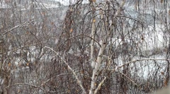 Slow motion of snow falling on background of birch Stock Footage