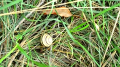 Time lapse of snail crawling on grass Stock Footage
