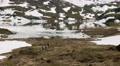 Hiking in Norway 4k or 4k+ Resolution