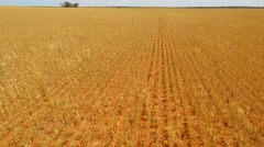 Farm Crops Reverse Track Stock Footage