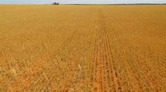 Farm Crops Track Forward Stock Footage
