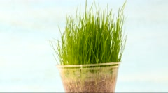 Rotating green grass in a pot. Stock Footage
