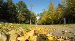 Golden Autumn Leaves Falling in Slow Motion Stock Footage