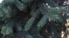 Fir branches swaying in the wind Stock Footage