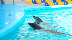 Dolphins in the Dolphinarium Stock Footage