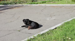 Stray black dog in the park Stock Footage