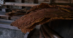 Tobacco Leaves Hanging and Drying in Colonial Style Barn, 4K Stock Footage