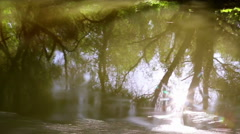 Danube delta forested wetlands reflection Stock Footage