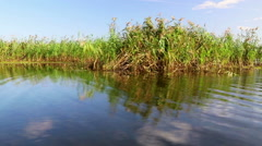 Danube delta wetlands in motion Stock Footage