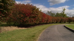 Red bushes Stock Footage