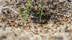 Ant ants on nature insects the earth movement works Stock Footage