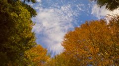Autumn forest with running clouds Stock Footage
