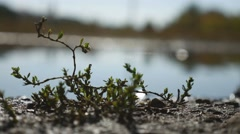 Land grass lake water with blurred background bokeh highlights Stock Footage