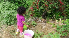 Little girl plucks from the tree the ripe cherries and puts them in the bucket Stock Footage