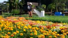 Flower market in phurua district, Loei, Thailand Stock Footage