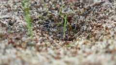Ant ants on nature the earth insects movement works Stock Footage
