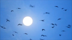 Crows circling on blue sky with sun Stock Footage