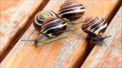 Snails crawling on wooden surface Stock Footage