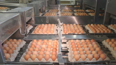Production line for poultry farm Stock Footage