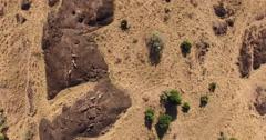 Zooming onto pride of lions on rock in Masai Mara Kenya Stock Footage