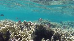 Sea life on Mauritius island Stock Footage