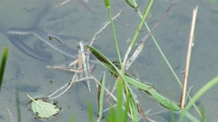 Snake in the lake frightened Stock Footage