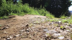 A mother with her children walks in the forest Stock Footage