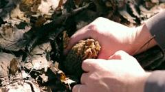 Man picks up a big mushroom Stock Footage