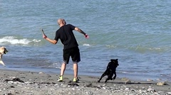 Black lab dog game go fetch, beach waves slow motion Stock Footage
