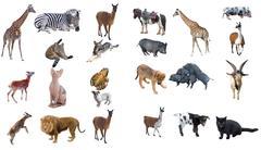 Group of animals Stock Photos
