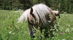 Savage horse in the meadow Stock Footage