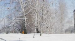 Beautiful Frost on the Young Birch-trees. Winter. Dolly Stock Footage