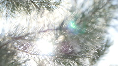 The sun is Shining through the Snowy Spruce Branch. Close Up Stock Footage
