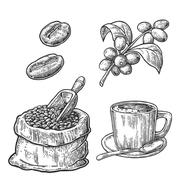 Sack with coffee beans with wooden scoop and beans, cup, branch with leaf and Stock Illustration