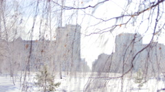 Birch branches in the Winter against high-rise Buildings Stock Footage