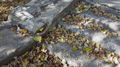 Yellow dried leaves on stone stairs. Stock Footage