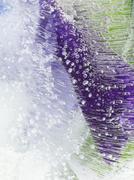 Organic purple green abstraction Stock Photos