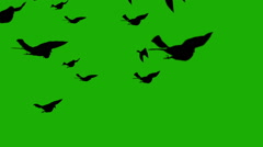 Silhouette birds on green screen  Arkistovideo