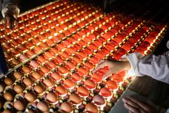 Female staff examining eggs in lighting control quality Stock Photos