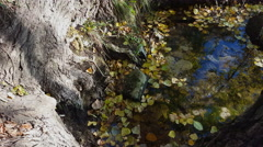 Fallen autumn leaves floating in puddle water. Stock Footage